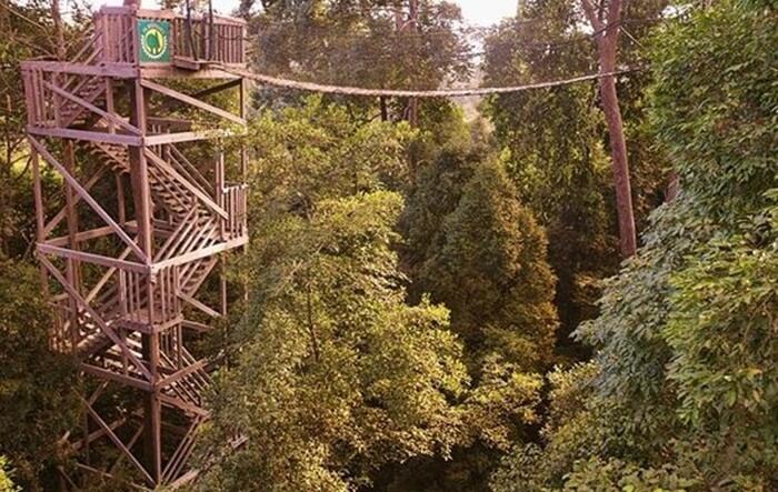 untuk naik ke canopy bridge bukit bangkirai, pengunjung harus menaiki tower setinggi 25-30 meter