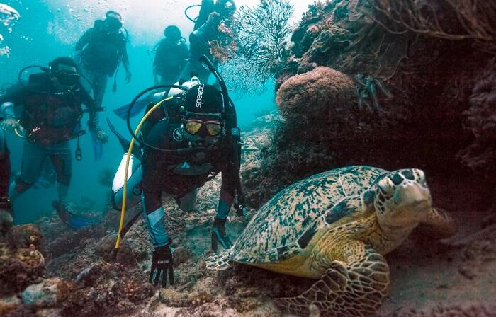 Turtle point salah satu spot penyelaan di perairan pulau maratus, yang memberikan kesempatan besar untuk bertemu dnegan kura-kura di habitat aslinya