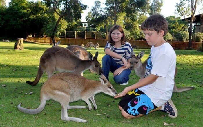 tempat wisata di Perth Caversham menjadi rumah bagi 200 spesies fauna yang jumlahnya lebih dari 2.000 ekor.
