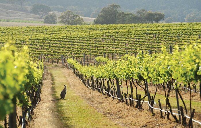 Kota tempat wisata di New South Wales ini Memiliki luas yang membentang 180 km.