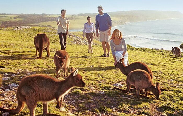 Lebih dari sepertiga dari pulau tempat wisata di Australia ini diisi oleh taman nasional dan konservasi. Taman Nasional Flinders Chase adalah yang terbesar di Pulau Kanguru