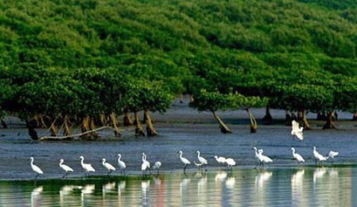 Cagar Alam tempat wisata di Shenzhen ini Ini mencakup area seluas 368 hektar.