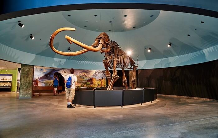 Ada sepuluh area di museum Tempat Wisata di Los Angeles ini. Area dinosaurus, burung, mamalia, safari Afrika, hewan liar dan lainnya