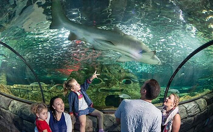 Tempat wisata di Sydney ini menggambarkan kehidupan laut di perairan sekitar Darling Harbour.