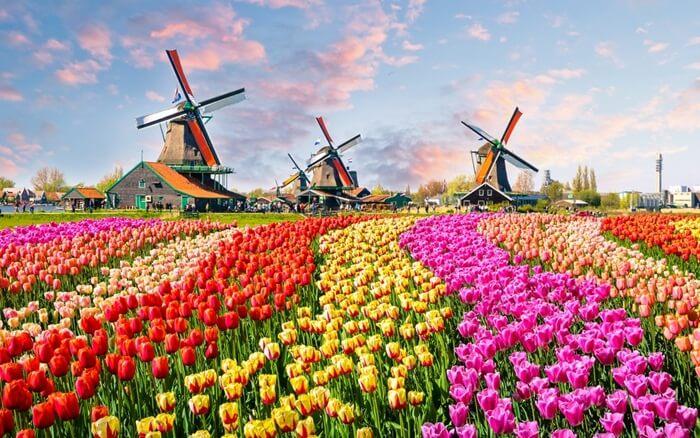 Sebanyak 50.000 bibit bunga ditanam di tempat wisata di Belanda ini. Tersusun dalam dua lapisan untuk memunculkan mosaik bunga yang berkesan romantis.