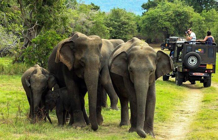 Taman nasional tempat wisata di India ini juga rumah sekitar 320 spesies fauna