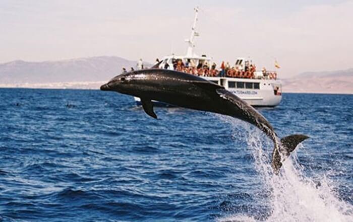 Kota pesisir tempat wisata di New South Wales ini memiliki ratusan lumba-lumba yang hidup bahagia di perairan kota.