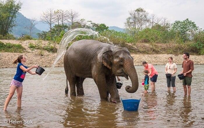 Di tempat wisata di Chiang Mai ini pengunjung diundang untuk menghabiskan waktu sehari secara menyenangkan dengan gajah.
