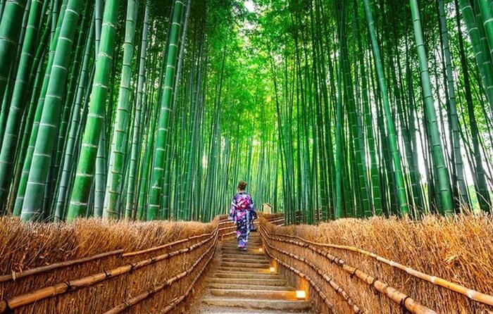 tempat wisata di kyoto ini dikenal dengan adanya bamboo forest atau hutan bambu yang elok