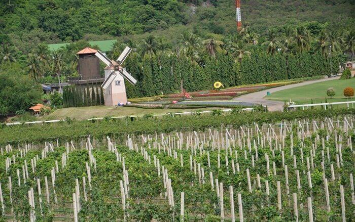 Di tempat wsata di Pattaya ini pengunjung dimanjakan dengan danau indah, taman kincir angin khas Belanda, hingga menikmati olahan buah anggur