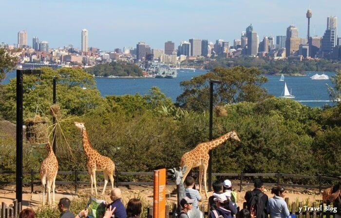 Tempat wisata di Sydney ini sedikitnya memiliki 2.900 spesies hewan, baik itu hewan eksotis maupun hewan yang terancam langka.