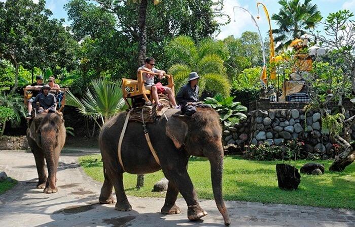 di tempat wisata Ubud Desa Taro juga ada atraksi wisata baru yang cukup unik dan menarik bagi wisatawan yang datang yakni Trekking Gajah