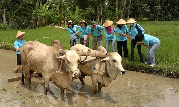 Desa tempat wisata Kaliurang ini menawarkan keaslian budaya, alam dan sosial sebagai daya tariknya.