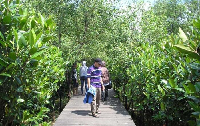 Keberadaan tempat wisata Pasuruan berupa Hutan Mangrove ini berawal dari kepedulian seorang warga pesisir timur yang bernama Pak Mukarim