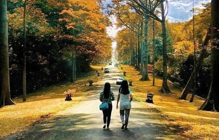 Bagi pecinta tanaman Anggrek, tempat wisata Pasuruan ini memilki rumah kaca yang mengkoleksi lebih dari 2.000 bunga Anggrek ini.