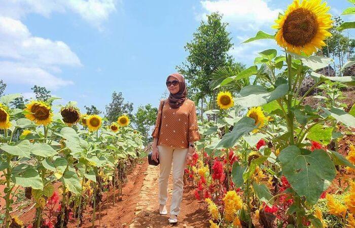 Tempat wisata Bantul berupa Taman penuh warna-warni bunga ini, menyajikan keindahan jajaran bunga matahari yang sayang untuk dilewatkan