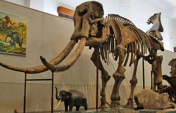 Di tempat wisata Sragen museum dapat diperoleh informasi lengkap tentang pola kehidupan manusia purba di Jawa