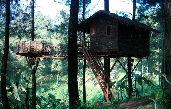 Tempat wisata Pasuruan Rumah Pohon The Pines Taman Dayu Pandaan merupakan konsep rumah kayu yang sangat menyatu dengan alam.