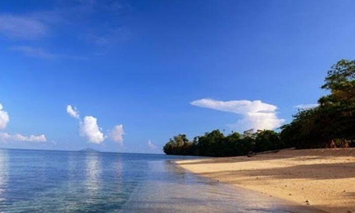 pantai brang sedo pulau moyo dengan pepohonan lebat di pantai