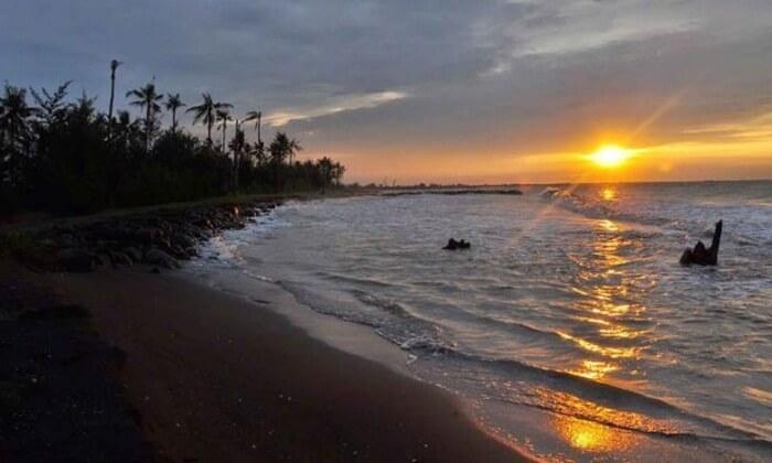 Di tepian Pantai tempat wisata Pekalongan ini tumbuh pohon cemara yang rindang.