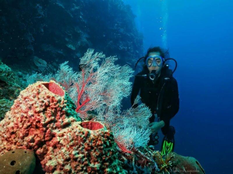 Menikmati Keindahan Bawah Laut