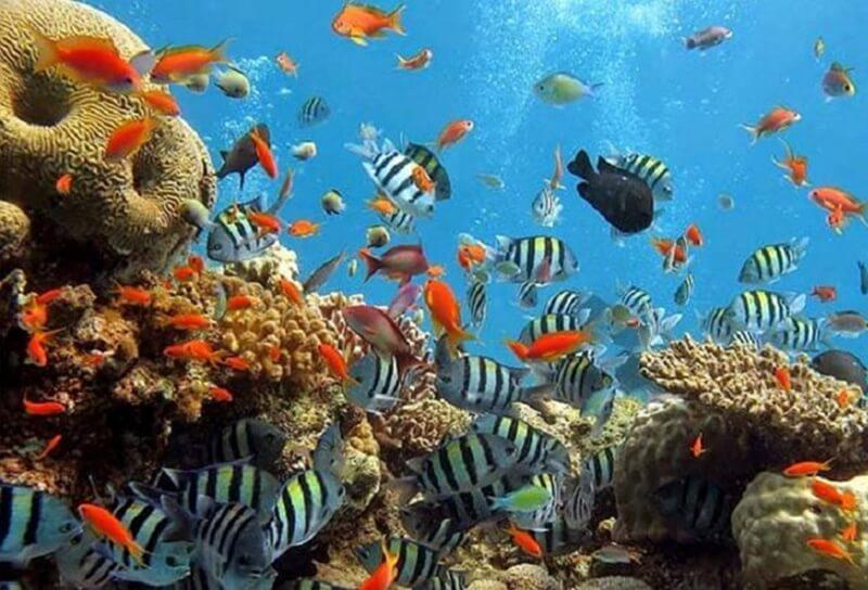 Surga Bagi Para Pecinta Fotografi Bawah Laut