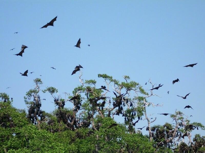 Tempat Habitat Kelelawar