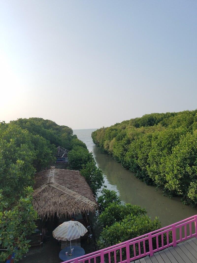 Hutan Mangrove Brebes