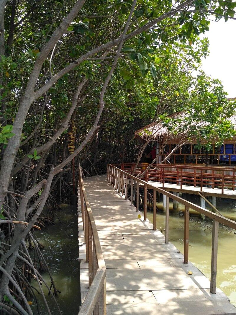 Jalur Trekking Mangrove Brebes