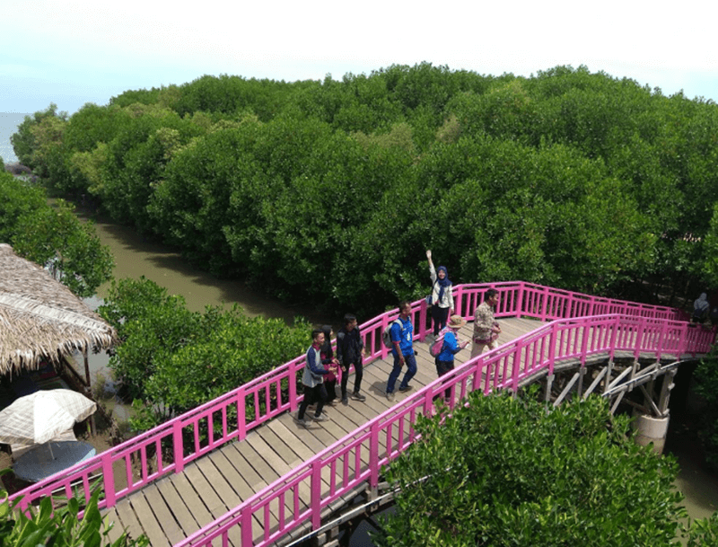 Jembatan Elok Mangrove Brebes
