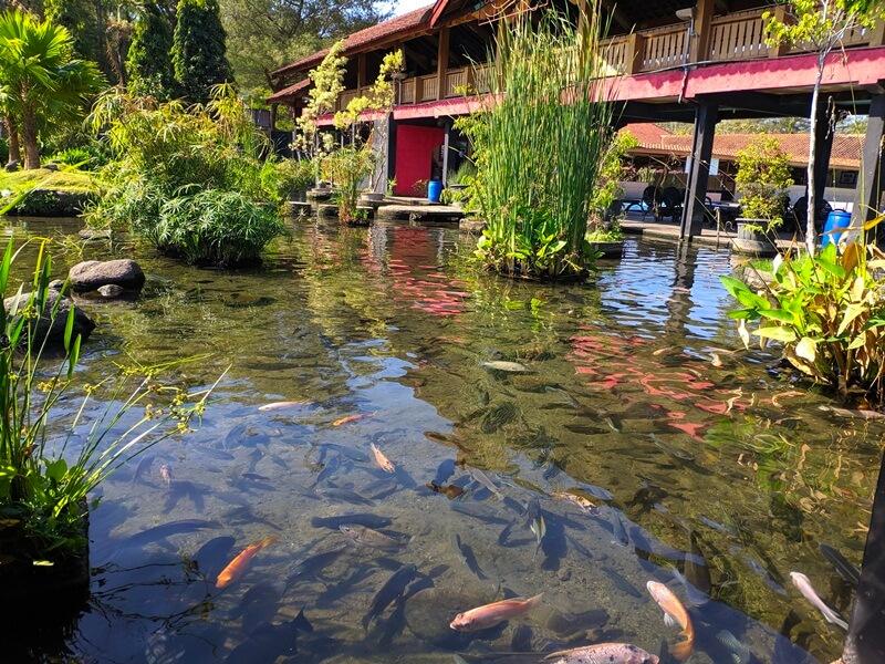 Kolamnya Dihiasi Ikan