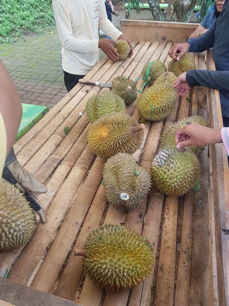 mencicipi durian yang terkenal