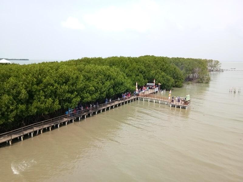 Penataan Kawasan Mangrove Brebes