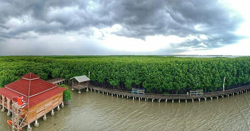 Ragam Fasilitas Di Mangrove Brebes