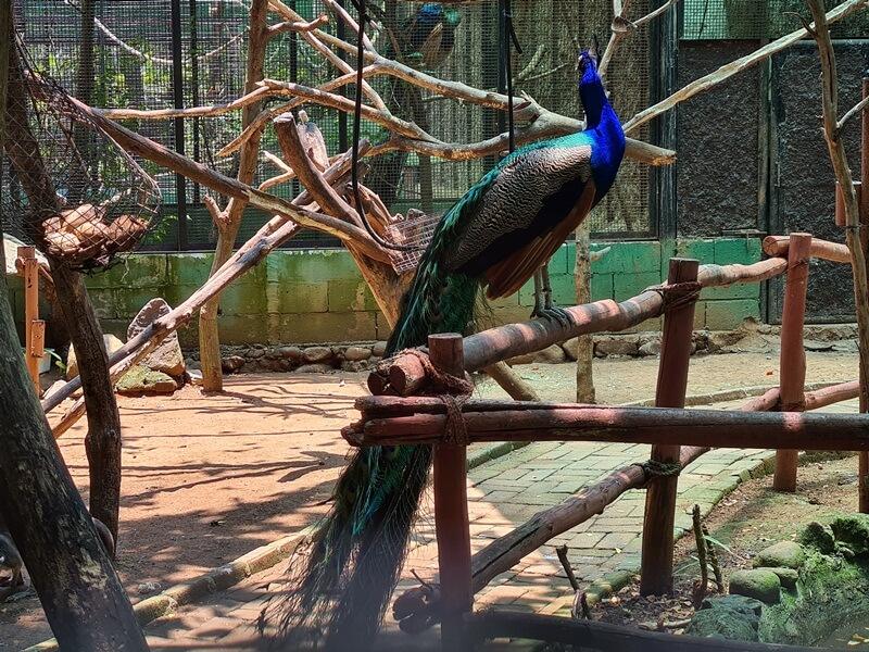 burung cantik penghuni batang dolphin center