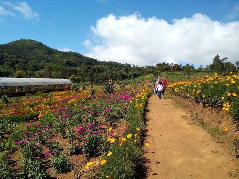 Berkeliling Menikmati Indahnya Kebun Bunga