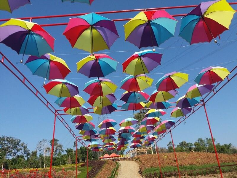 Taman Bunga Merangin Jambi