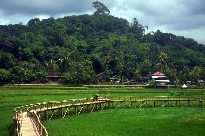 Lokasi persawahan ini juga dikelilingi hutan hijau yang membuat pemandangan semakin bagus. Karena itulah, ratusan bahkan ribuan wisatawan pergi ke sana untuk mendapatkan gambar diri mereka dengan latar pemandangan yang indah.