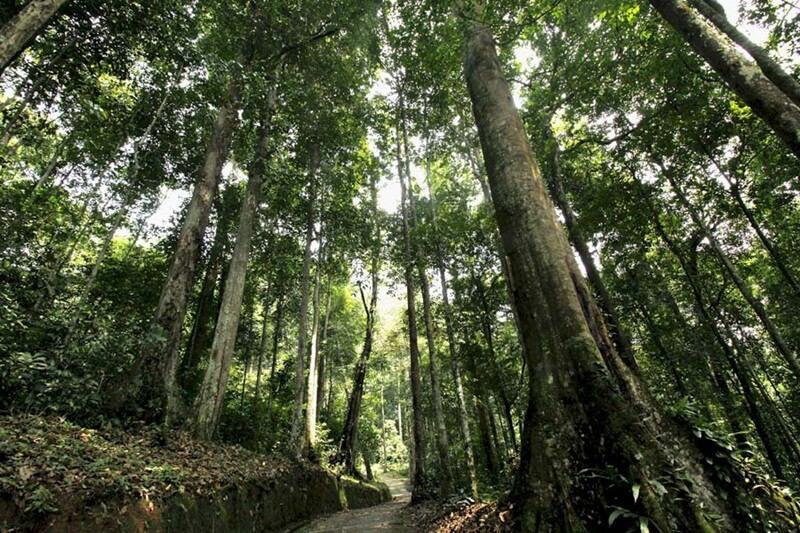 Hutan Ketambe Aceh