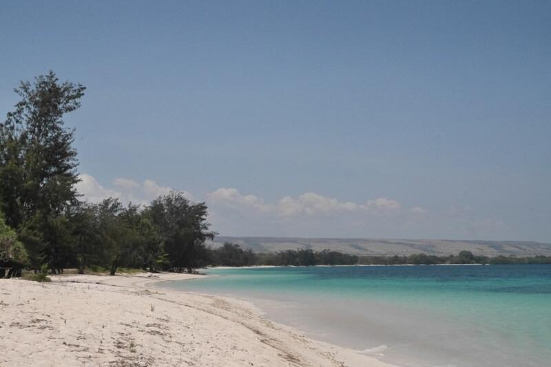 Jajaran Pohon Cemara Di Sepanjang Pantai