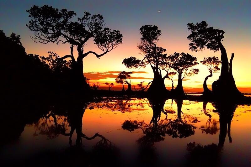 Siluet Mangrove Yang Indah