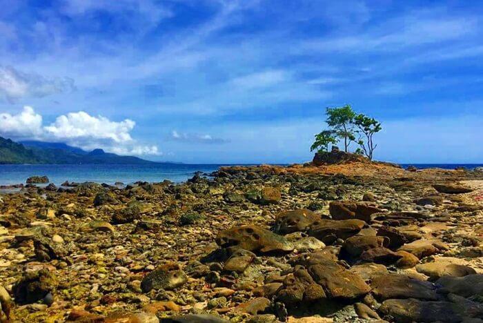 di tengah hamparan batu besar yang menjorok ke laut di Pantai Batu Taka Urung terdapat sebuah pohon besar. Tampak menarik perhatian, lokasi itu tentu cocok menjadi lokasi bersawafoto.