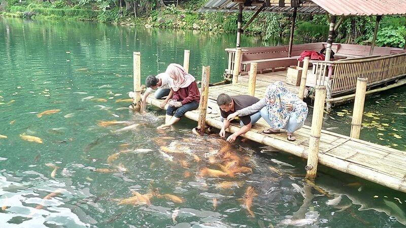 Ikan Di Situ Cipanten Majalengka