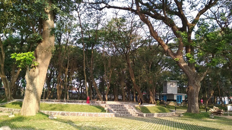 Rindangnya Pepohonan Di Hutan Joyoboyo