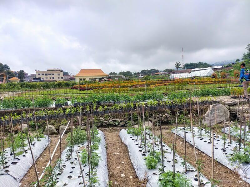 Tanaman Holtikultura Di Kebun Refugia Magetan