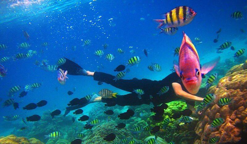 Bawah Laut Pulau Rubiah