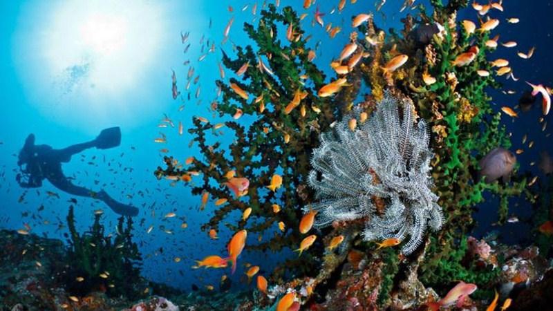 Kerajaan Bawah Laut Pulau Rubiah