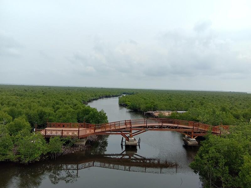 Hutan Mangrove Langsa