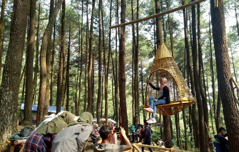 Spot Foto Yang Lainnya di Hutan Pinus Sentul