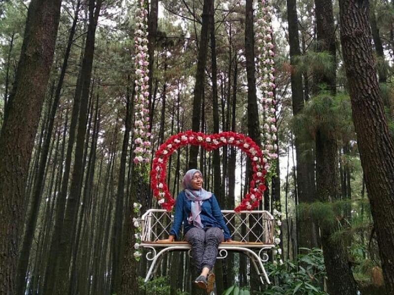 Spot Foto di Hutan Pinus Sentul